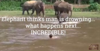 Elephant thinks man is drowning…Incredible